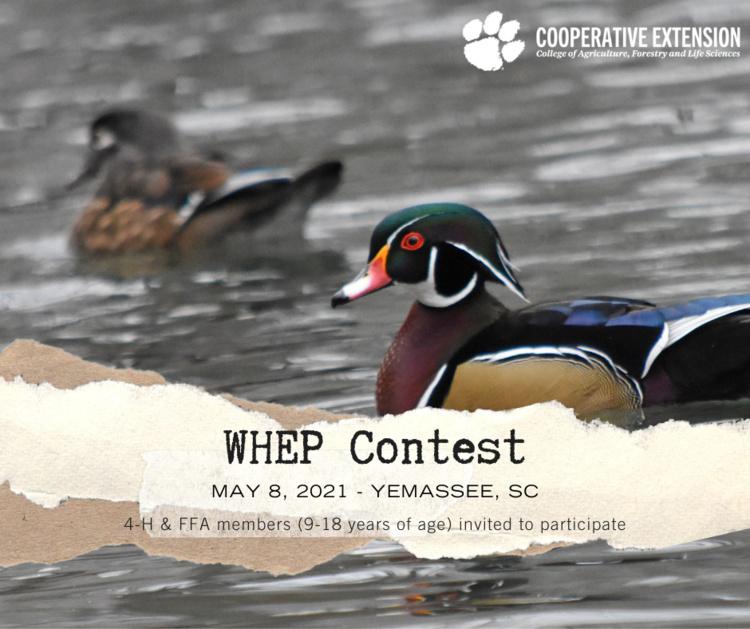 WHEP Contest flyer (wood duck)