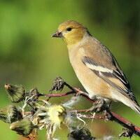 Birding with Baird