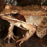 Hide N Seekers: Amazing Amphibians