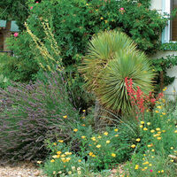Landscaping with Perennials, Shrubs, and Trees