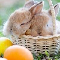 Landis Easter Egg Hunt