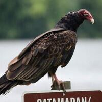 Canceled:  Virtual Vultures