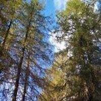 Spring Tree I.D. Hike