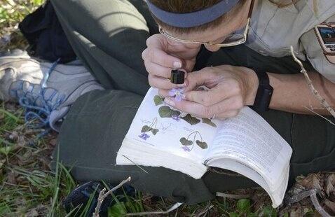 naturalist identifying object