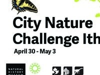 City Nature Challenge Ithaca