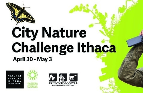 City Nature Challenge Ithaca