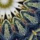 2021 Cannabis & Psychedelic Symposium