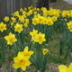 Guided Tour: Spring Flowering Bulbs
