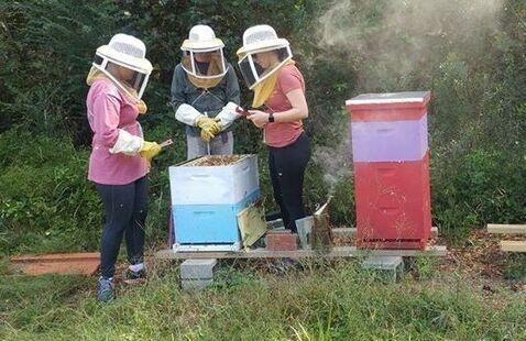 Beekeeping Hive Day