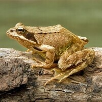 Frogs and Polliwogs