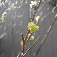 Spring Wild Edibles and Medicines