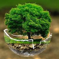Earth Day Tree Sale