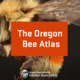 OSU Science on Tap: The Oregon Bee Atlas