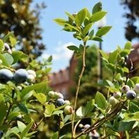 Insect, Disease & Pest Control in Home Fruit Plantings