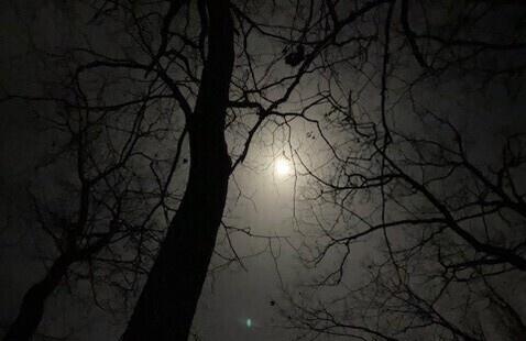 Pokagon After Dark