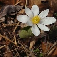 Spring Wildflower Walk