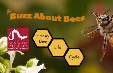 The Buzz About Bees Exhibit