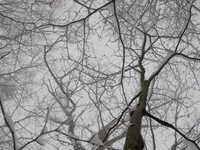 Adam Shulman: After Nature Had Drawn a Few Breaths