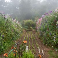 Chadwick Garden