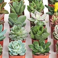 DIY Spring Succulents with SWE