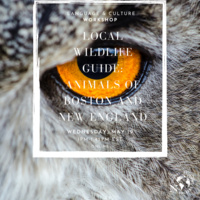 Local Wildlife Guide: Animals of Boston and New England