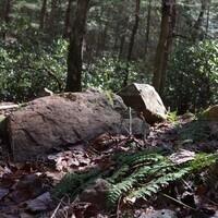 Geology Walk and Talk