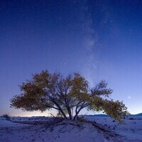 Into the Great White Sands: Photographs by Craig Varjabedian