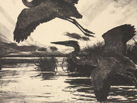 """Frank Weston Benson (American, 1862–1951), """"Blue Herons,"""" 1931. Lithograph. Bequest of William P. Chapman, Jr., Class of 1895; 62.0979. Johnson Museum of Art."""