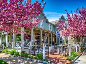 Greenport Cherry Blossom Festival Petal Tour