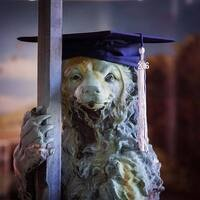 bear with grad cap