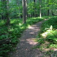 A dirt trail through lush forest