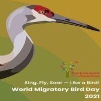 Birdwatching Basics