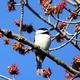Feathered Friends - Monthly Bird Walk!