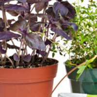 Take & Make Kit: Do It Yourself Ceramic Teapot Flower Planters