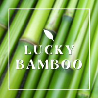 """Picture of bamboo stacks with the words """"Lucky Bamboo"""" over"""