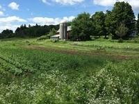 The Common Thread Farm in Madison, NY, a Climate Smart Farm