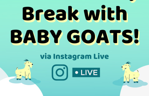 Virtual Study Break with BABY GOATS! | RCL Stress-Less Week