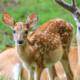 A Deer's Year