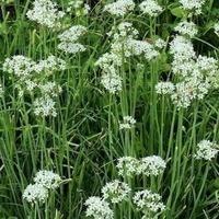 Oak Bluffs Plant Sale