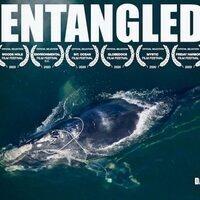 Environmental Film Festival: Entangled