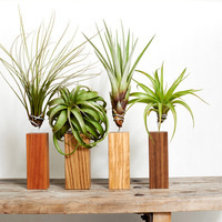 Newman Center Plant Giveaway