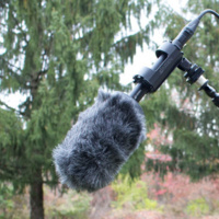 Microphone in a forest