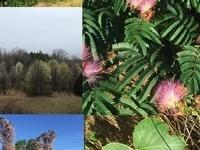 Invasive Plant Management Workshop and Field Tour