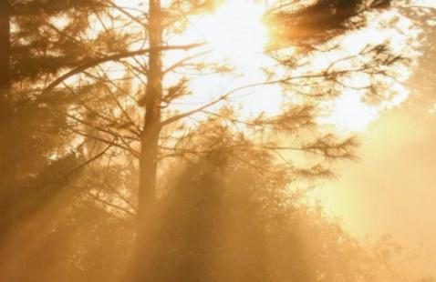Sunlight filtered through trees