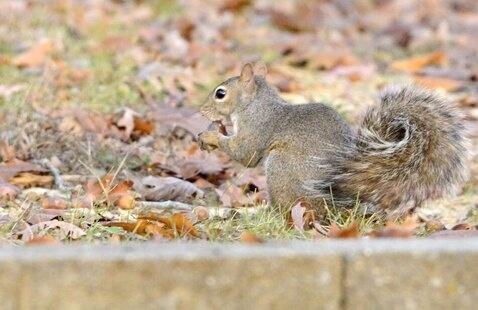 What's That Animal?, Paynetown SRA (Monroe Lake)