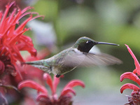 Birds and Blooms: In the Gardens