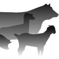 4-H Livestock Camp