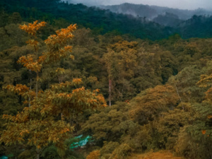 Tyson Summer Seminar Series: The Tropical Dry Forest - Rain Forest Transition Zone