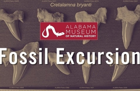 Fossil Excursion