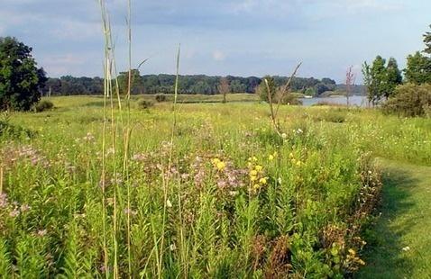 Prairie and lake